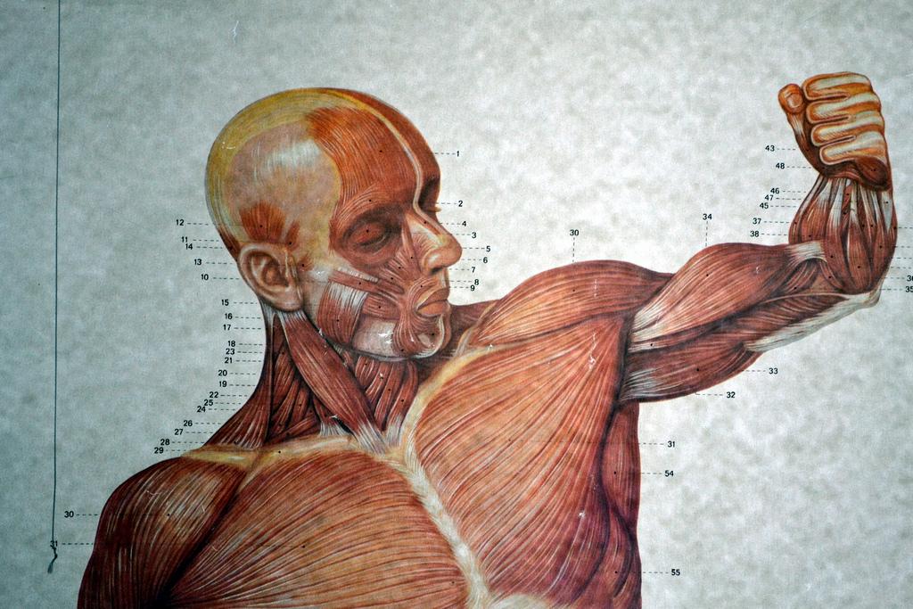 Bessere Körperkomposition in 6 Wochen – durch weniger Kohlenhydrate